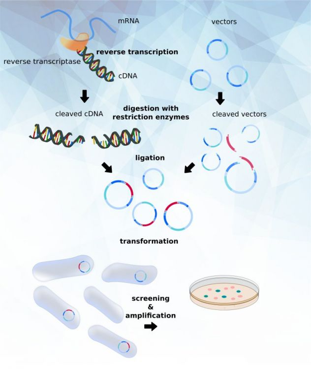 transomic ready to use plasmid products